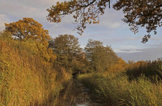 Autumn in Woodwalton fen nature reserve.
